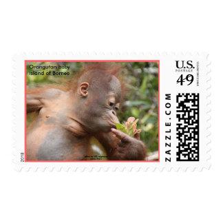 Baby Orangutan in Borneo Postage