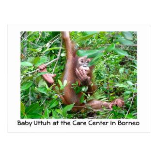 Baby Orangutan in Indonesian Rainforest Postcard