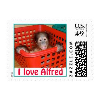 Baby Orangutan Orphan Alfred Postage
