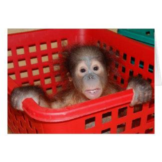 Baby Orangutan Orphan Card