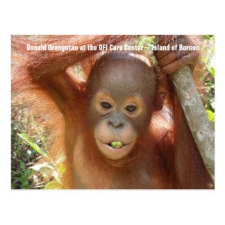 Baby Orangutan Photo Donald Postcard
