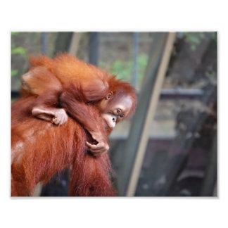 Baby Orangutan Art Photo