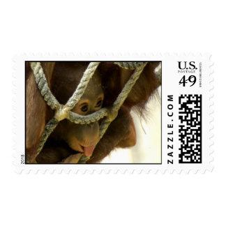 Baby Orangutan Postage
