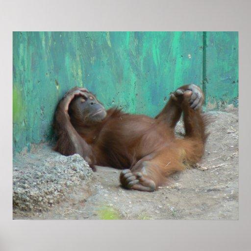 Baby orangutan resting poster