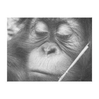 Baby Orangutan Stretched Canvas Print