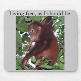 Baby orangutan:Tanjung Puting, Indonesia Mouse Pad