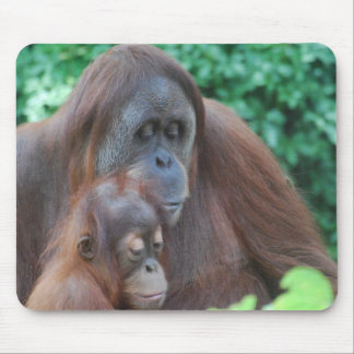 Baby Orangutan with Mother  Mouse Pad