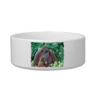 Baby Orangutan with Mother Pet Bowl Cat Bowls