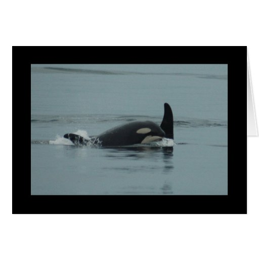 Baby Orca Greeting Card