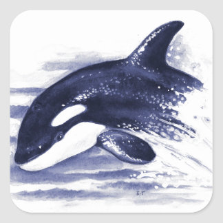 Baby Orca Jump Square Sticker