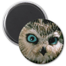 Baby Owl Close Up Magnet