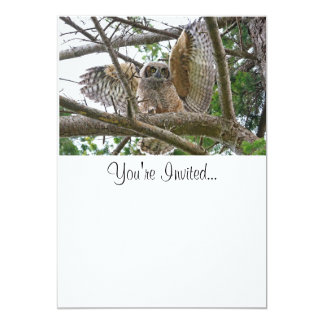 Baby Owl Picture Card