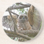 Baby Owl Picture Coaster