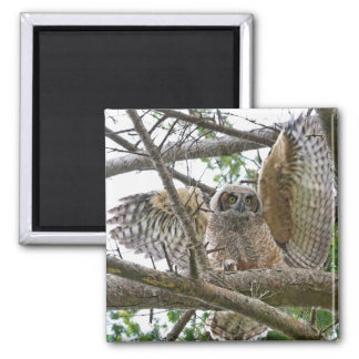 Baby Owl Picture Magnet
