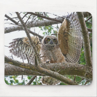 Baby Owl Picture Mouse Pad