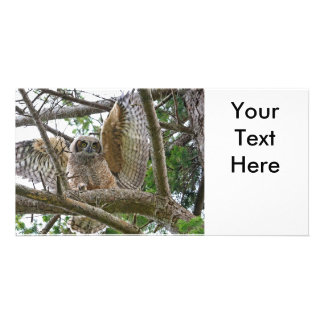 Baby Owl Picture Picture Card