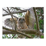 Baby Owl Picture Postcard
