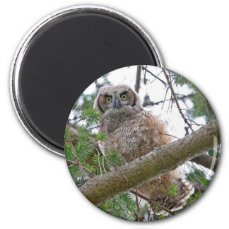 Baby Owl Staring 2 Inch Round Magnet