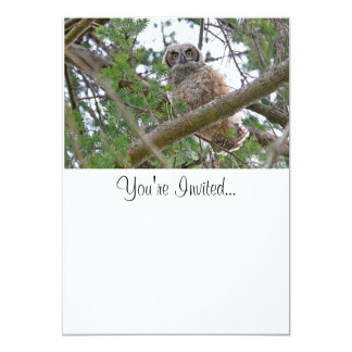 Baby Owl Staring Card