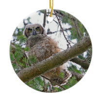 Baby Owl Staring Ceramic Ornament