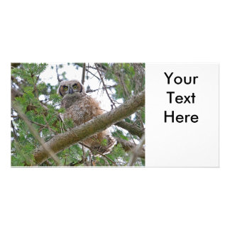 Baby Owl Staring Picture Card