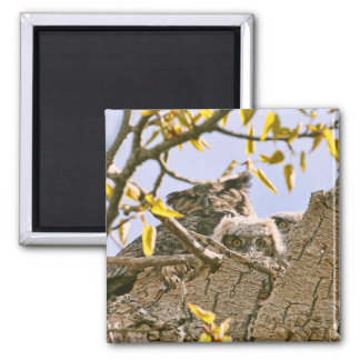 Baby Owls and Mother Owl in a Nest 2 Inch Square Magnet
