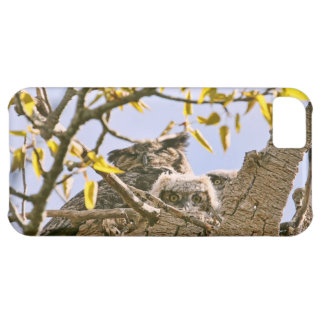 Baby Owls and Mother Owl in a Nest iPhone 5C Case