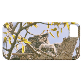 Baby Owls and Mother Owl in a Nest iPhone 5 Case
