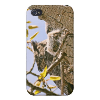 Baby Owls and Mother Owl in a Nest iPhone 4 Case