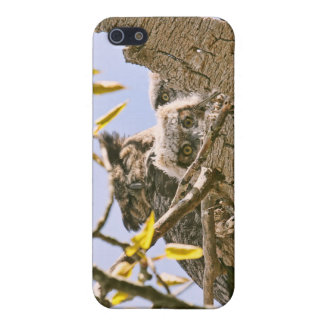 Baby Owls and Mother Owl in a Nest iPhone 5 Covers