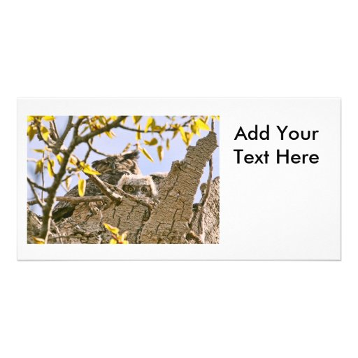 Baby Owls and Mother Owl in a Nest Photo Card Template