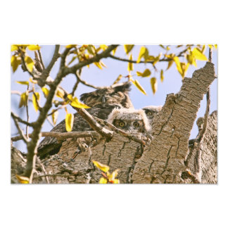 Baby Owls and Mother Owl in a Nest Photo Print