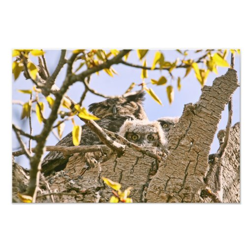 Baby Owls and Mother Owl in a Nest Photographic Print