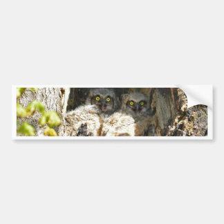 Baby Owls Car Bumper Sticker