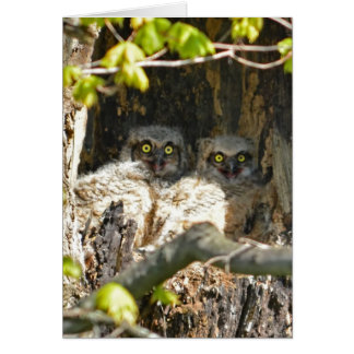 Baby Owls Greeting Card