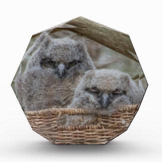 Baby Owls in a Wicker Basket Nest Acrylic Award