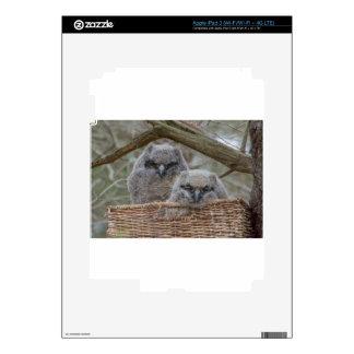 Baby Owls in a Wicker Basket Nest iPad 3 Skins
