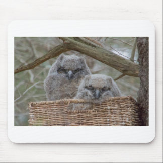Baby Owls in a Wicker Basket Nest Mouse Pad