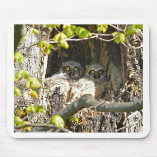 Baby Owls Mouse Pad