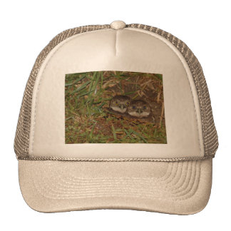 Baby Owls Trucker Hat