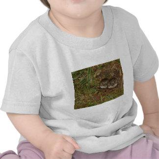 Baby Owls Tee Shirts
