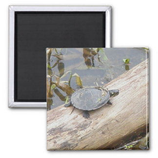 Baby Painted Turtle Magnet