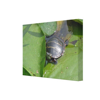 Baby Painted Turtle on Lily Pads Canvas Print