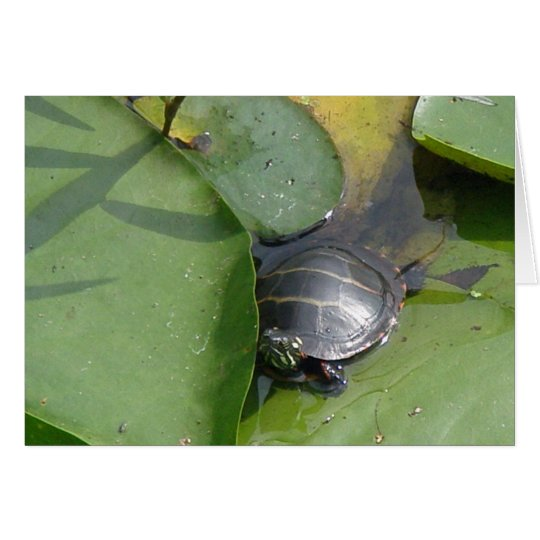 Baby Painted Turtle on Lilypad Items Card