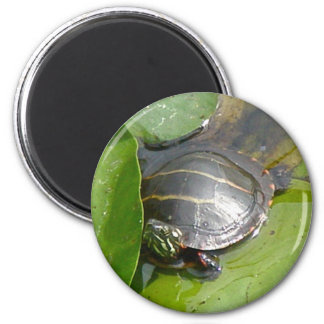 Baby Painted Turtle on Lilypad Items Magnet