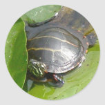 Baby Painted Turtle on Lilypad Items Classic Round Sticker