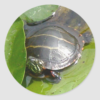 Baby Painted Turtle on Lilypad Items Sticker