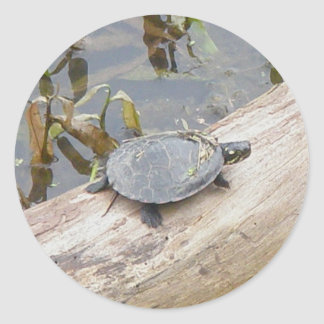 Baby Painted Turtle Stickers