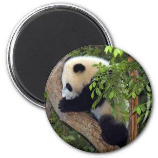 baby-panda3-10x10 imán redondo 5 cm
