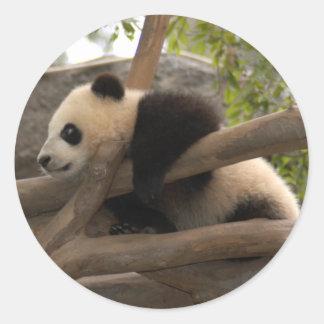 baby-panda-10x10 round stickers